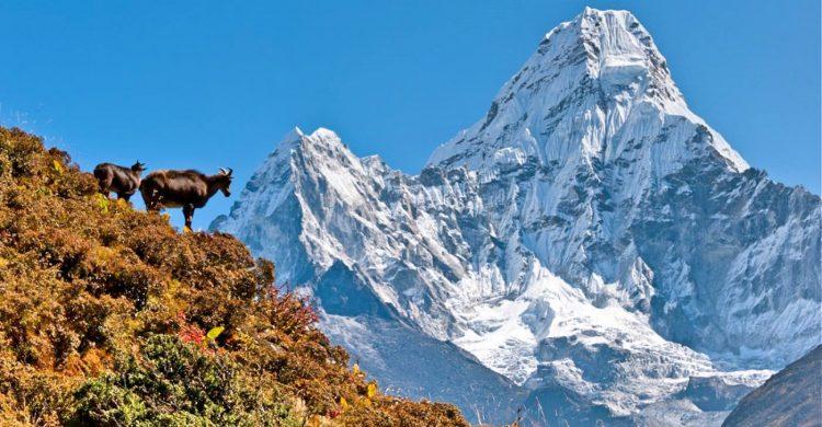 Image result for Luxury Everest Base Camp Trek
